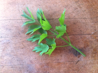 Lovage A wonderful celery substitute in soups, stews and casseroles.