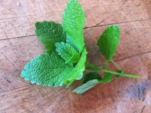 Lemon Balm The best thing I've found to make with lemon balm is this cool drink with an amazing after taste.  Simply wash the lemon balm and then twist it in your hands to release it's oils. Put it into a pitcher and cover with a lot of ice cubes. Add a little water and let it sit for 10 minutes. Drink it with ice. I also add lemon balm water to my iced tea, kombucha, and white wine. If you have any old-world/tea rose petals-- add them to the water too. Oh my! It's transporting!