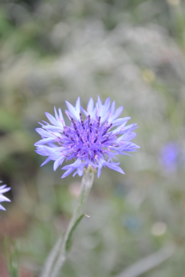 060_flowers